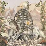 Juan Gatti collage 17 150x150 Fleurs dAnatomie