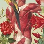 Juan Gatti collage 3 150x150 Fleurs dAnatomie