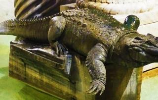 marthial-crocodile-raysse